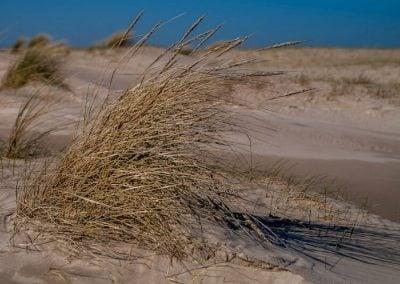 Texel - 4 seizoenen een prachtige omgeving bij T Eibernest (19)