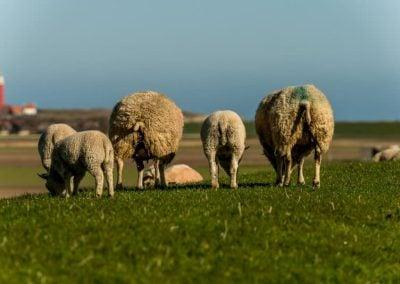 Texel - 4 seizoenen een prachtige omgeving bij T Eibernest (3)