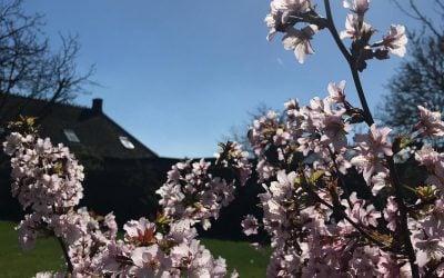 De tuin in bloei!